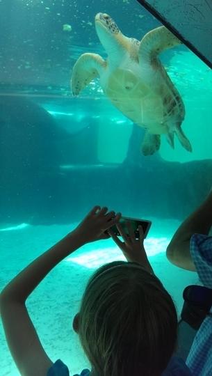 Mote Marine Laboratory And Aquarium Sarasota Fl Kid