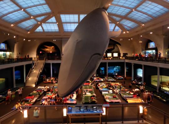 Buffalo American Museum Of Natural History