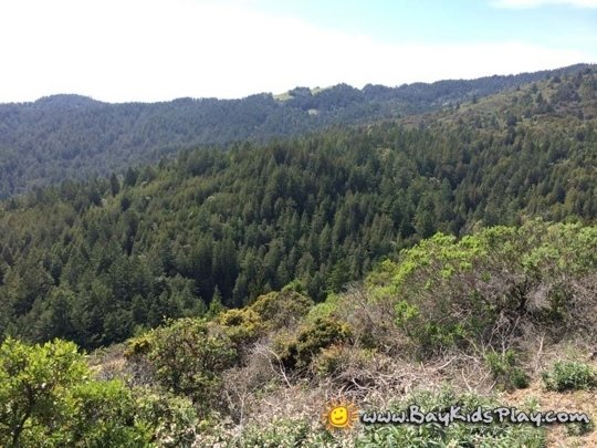 Mount Tamalpais State Park Mill Valley Ca Kid