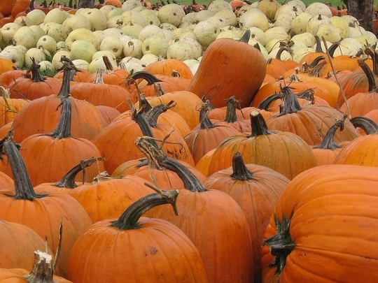 Pumpkin Patches For Kids And Families In Orange County Ca