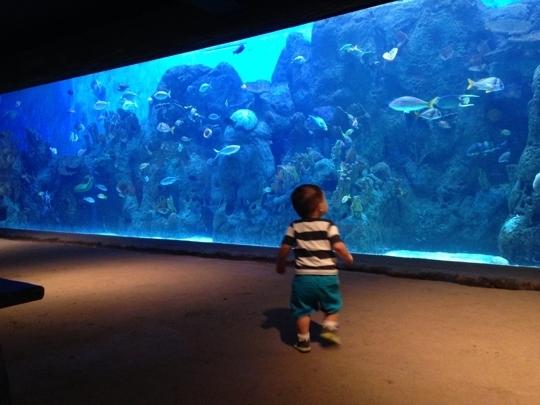 Cameron Park Zoo Waco Tx Kid Friendly Activity