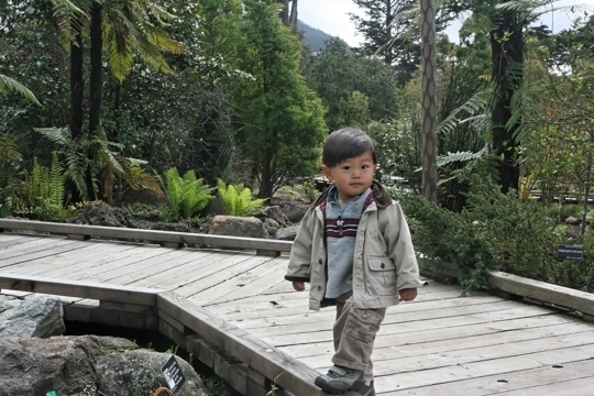 San Francisco Botanical Garden San Francisco Ca Kid Friendly A Trekaroo