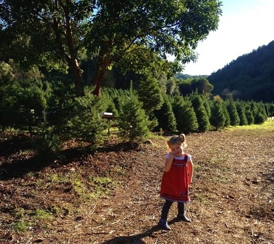 Cut Your Own Christmas Tree York Pa: Castro Valley Christmas Tree Farm