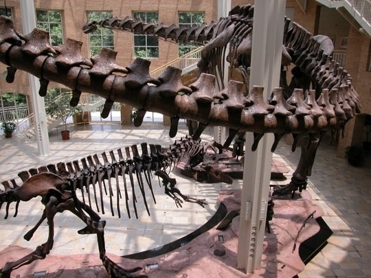 Fernbank Museum Of Natural History Atlanta Ga Kid