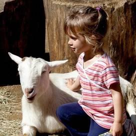 Farm-animals-children-trekaroo