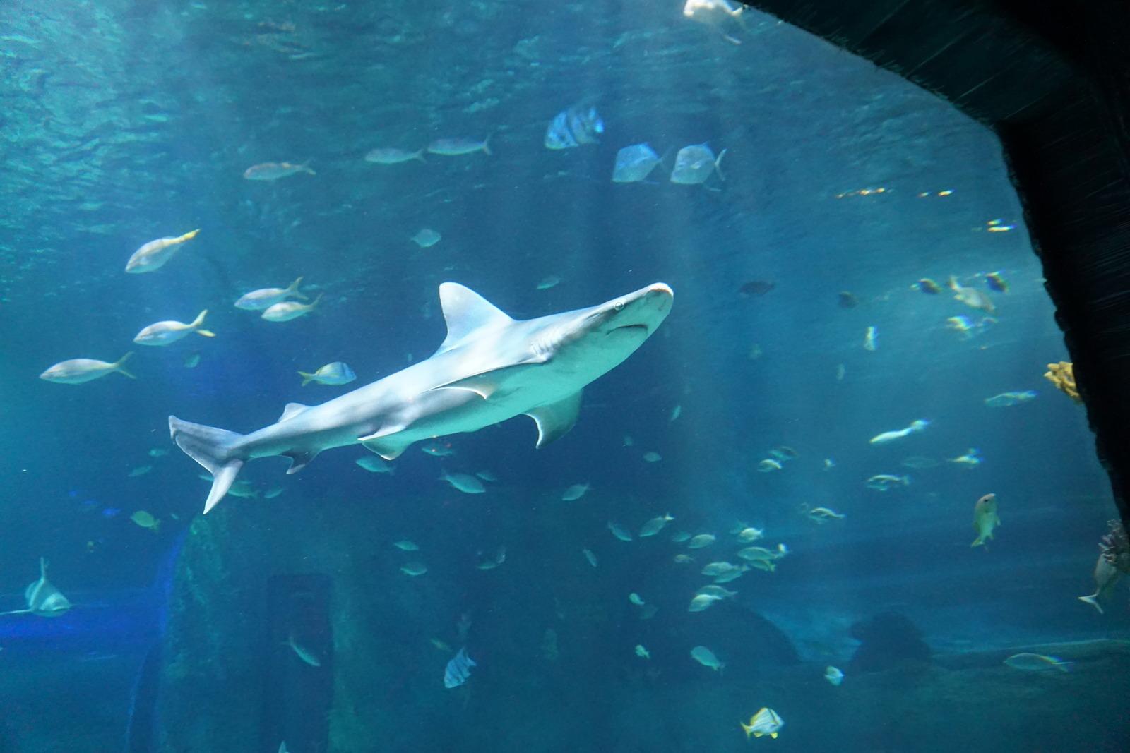 Orlando Sea Life Aquarium Orlando Fl Kid Friendly