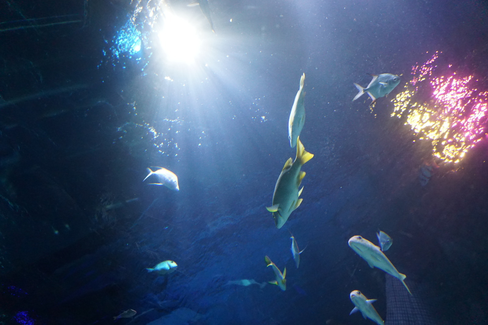 Orlando Sea Life Aquarium Orlando Fl Kid Friendly