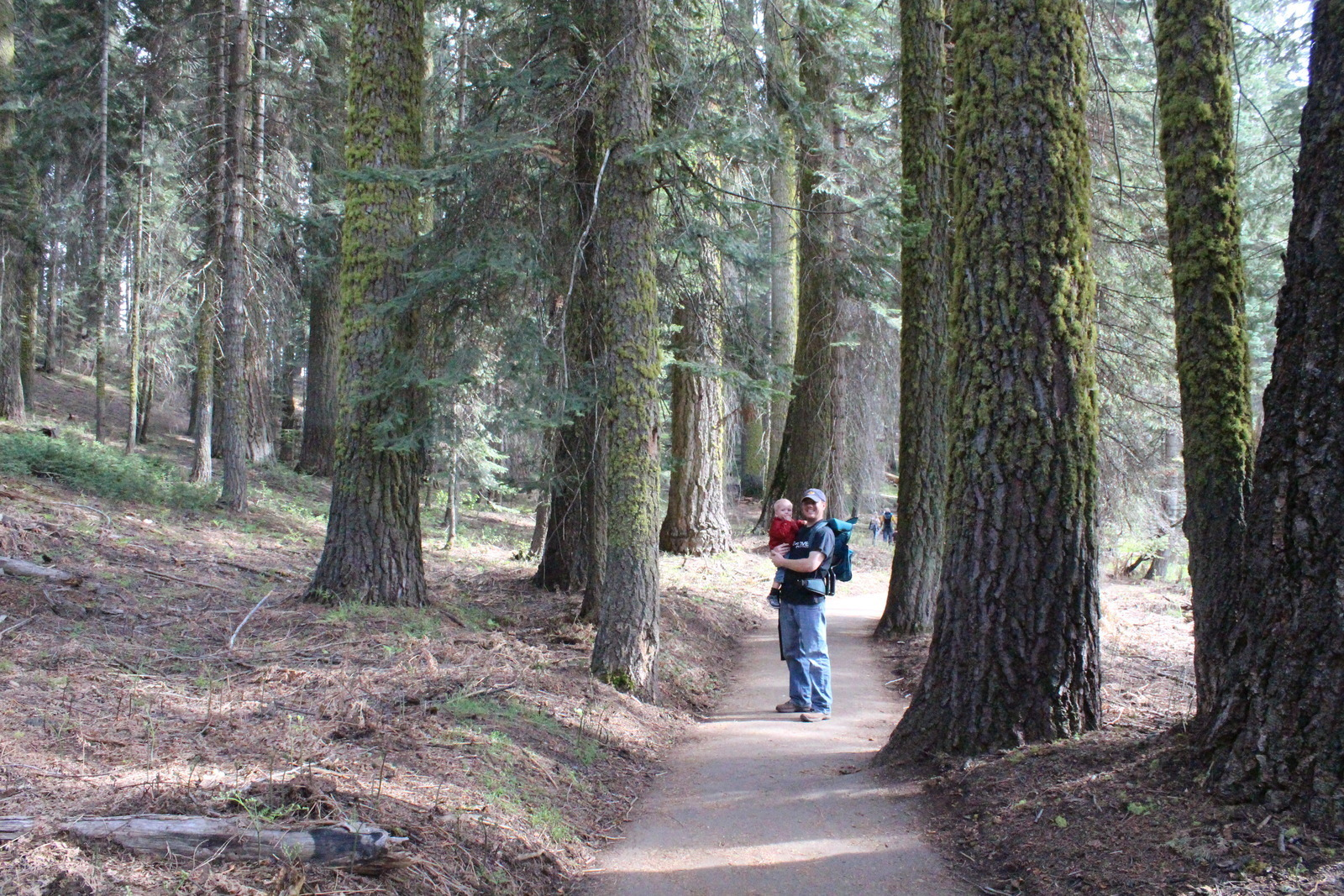 Crescent Meadow Sequoia National Park Ca Kid Friendly