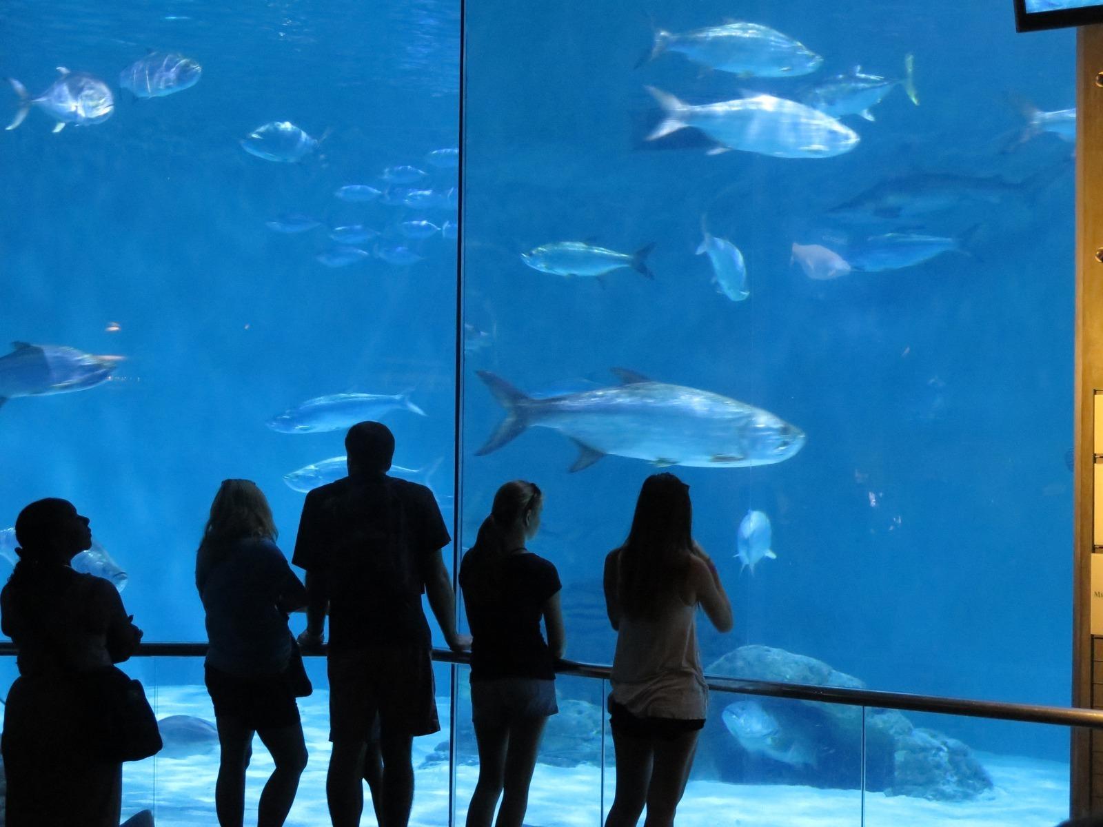 Audubon Aquarium Of The Americas New Orleans La Kid