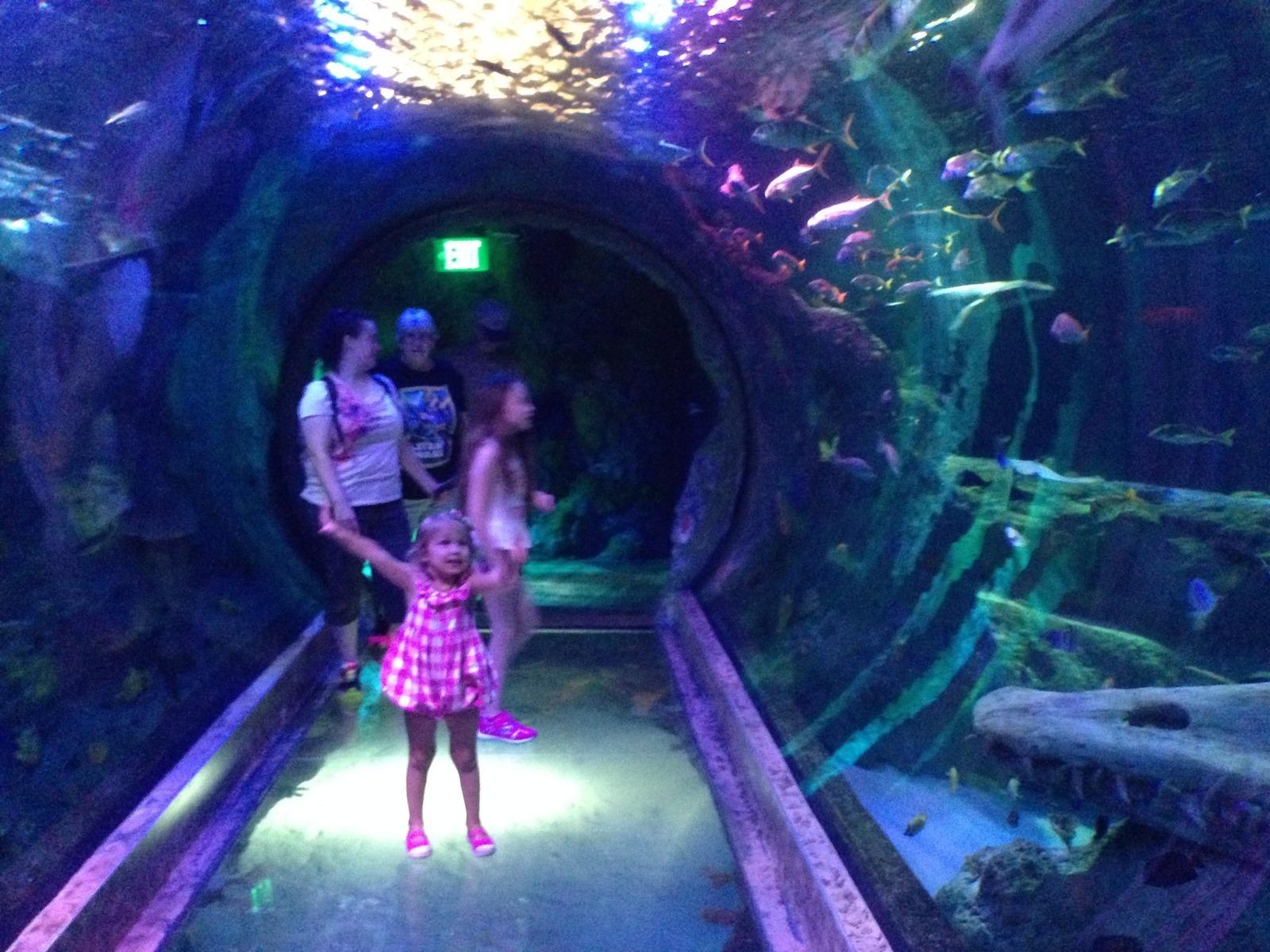 Sealife Aquarium In Grapevine Mills Mall Grapevine Tx Kid Fri Trekaroo