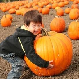 Pumpkin-patch-kids-trekaroo-digest