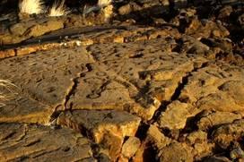 Puako Petroglyph Field - Waikoloa, Hawaii