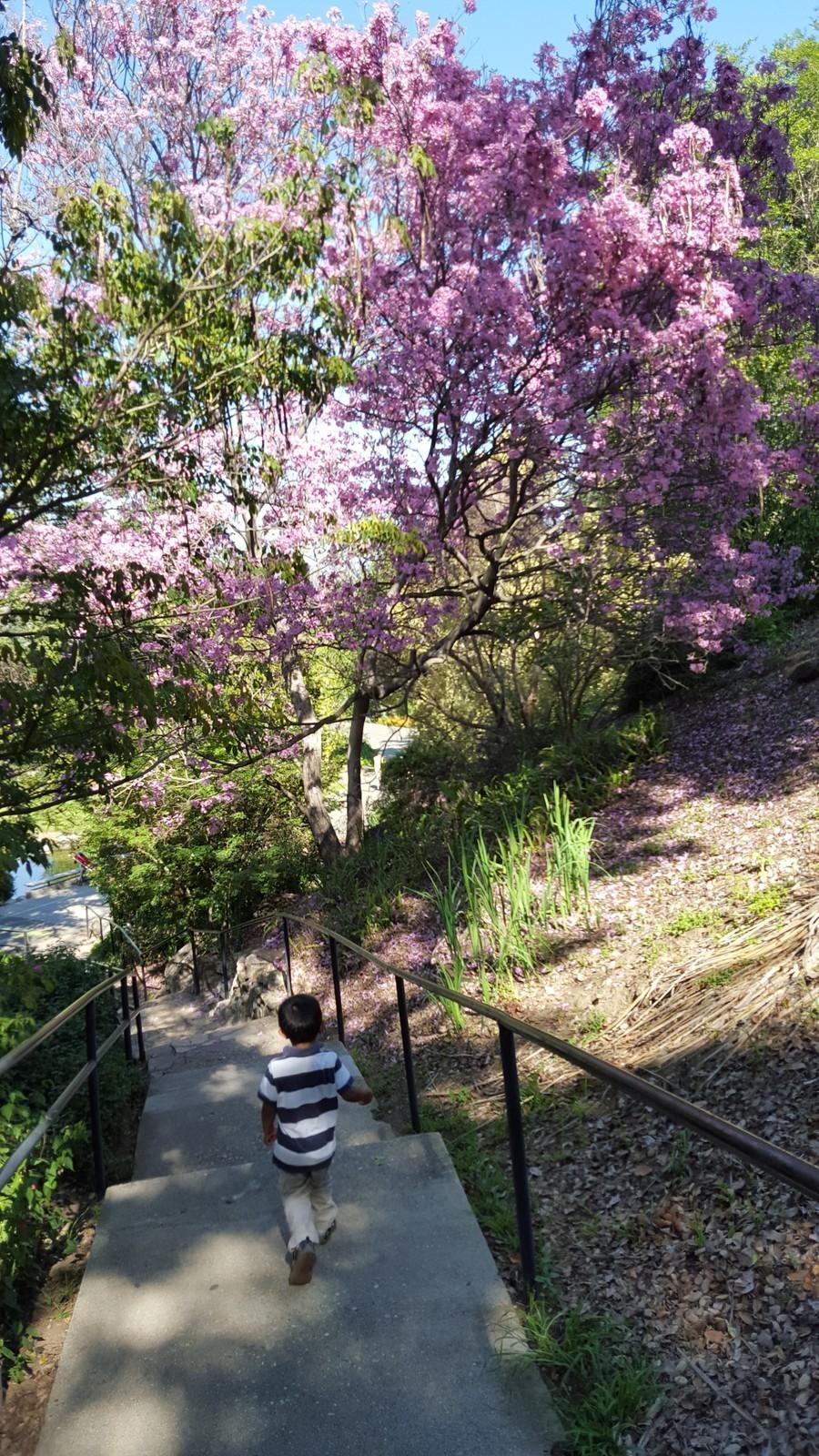 Los Angeles County Arboretum Amp Botanic Gardens Arcadia