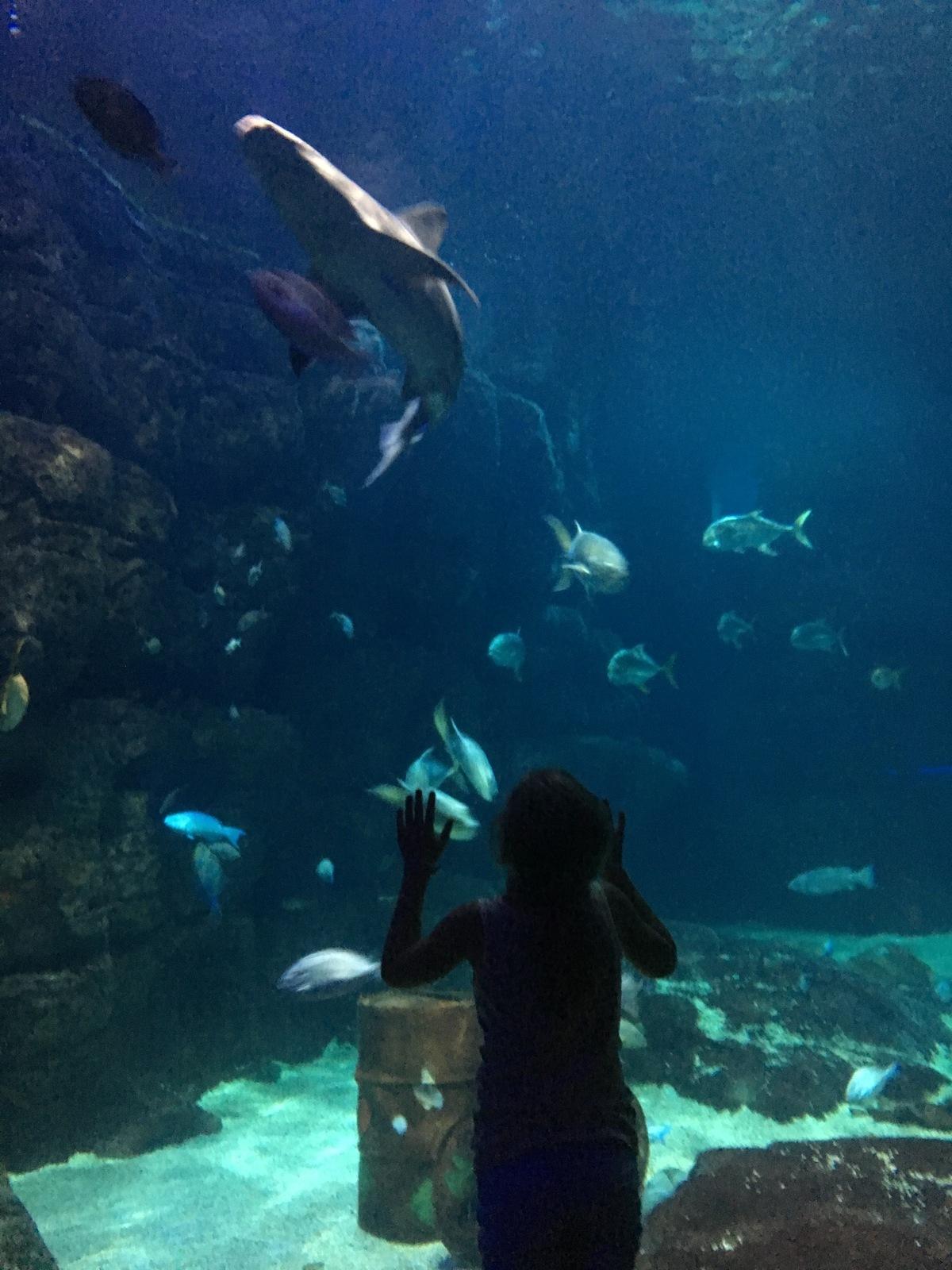 Virginia Beach Aquarium Hours Of Operation Sunday