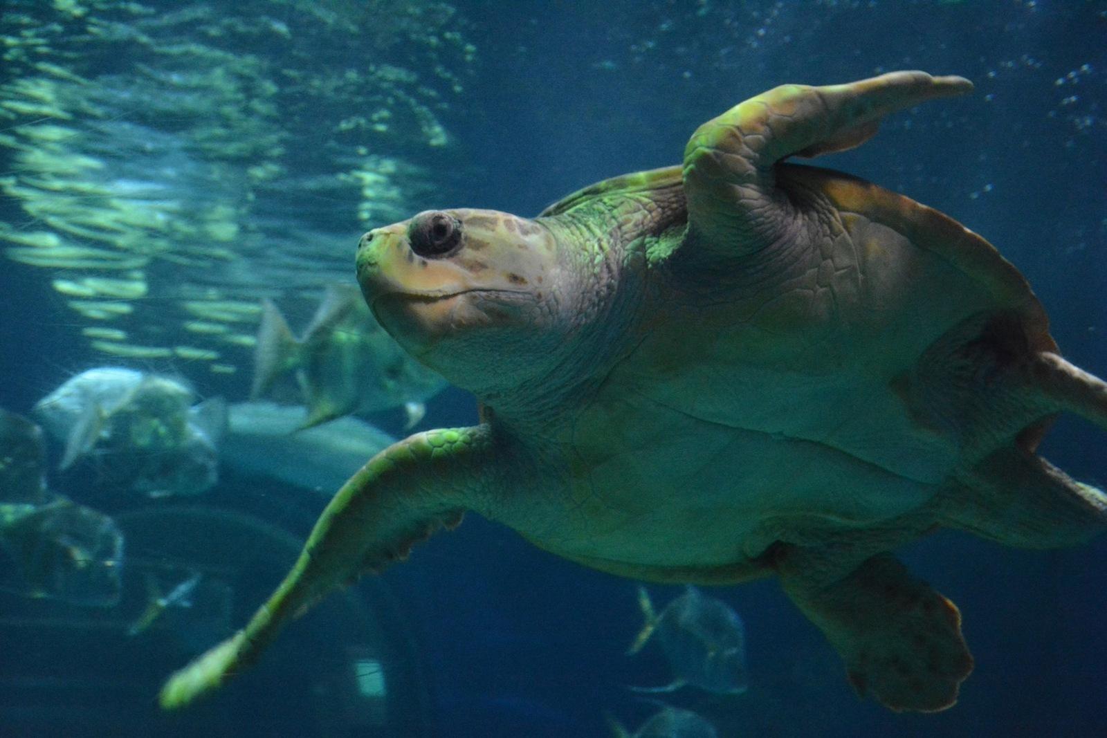 Virginia Beach Aquarium Hours Of Operation