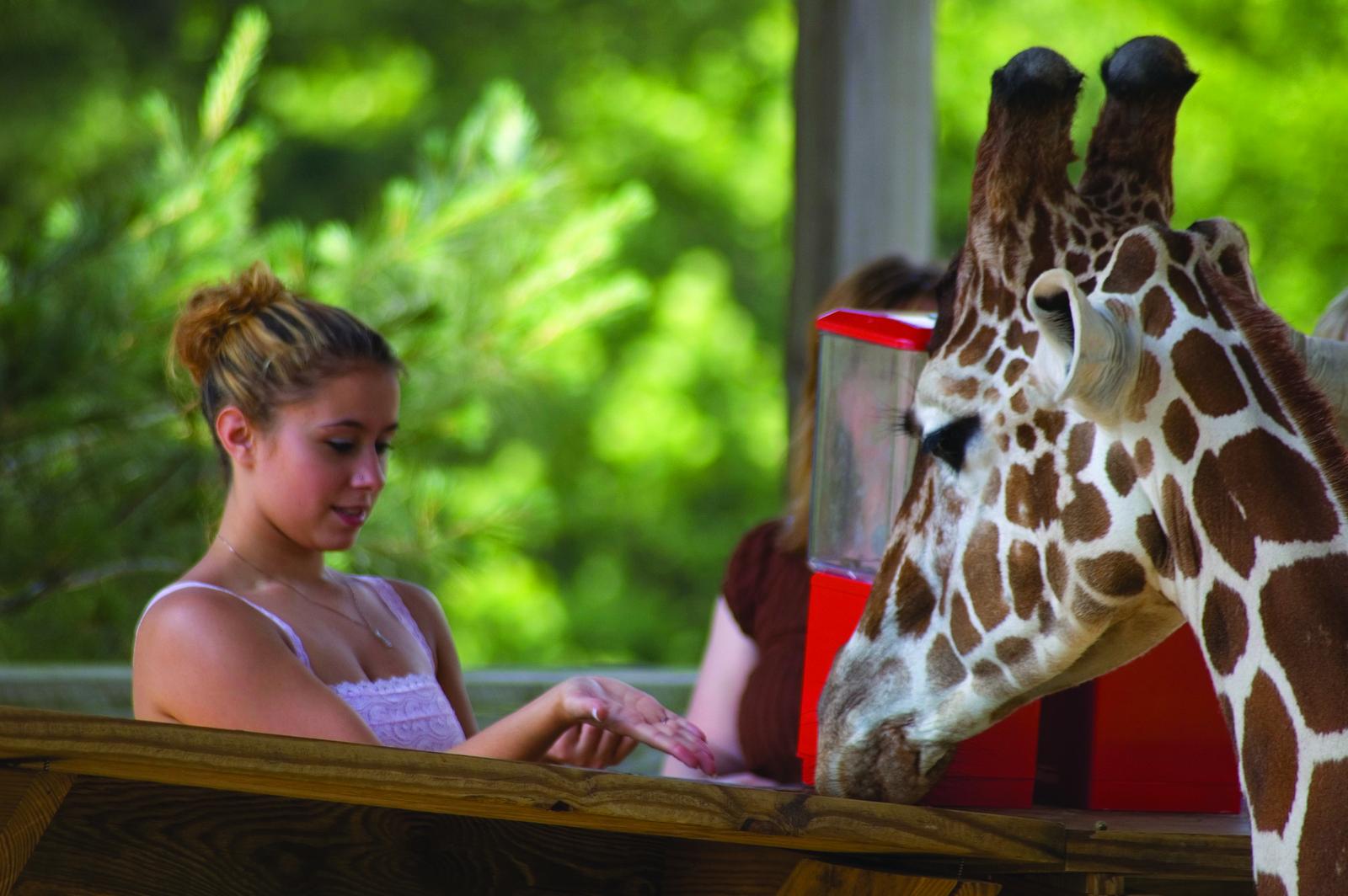 Metro Richmond Zoo - Moseley, Virginia
