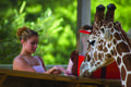 Metro Richmond Zoo | travel activity for kids