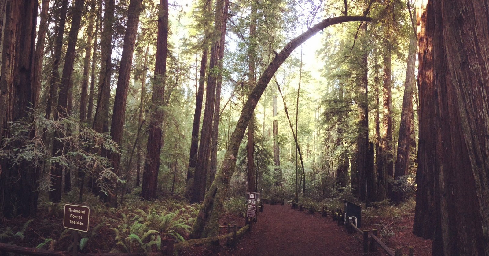 Armstrong Grove Redwoods State Reserve In Guerneville Ca