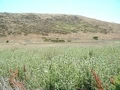Harmony Headlands hike - Cayucos, California