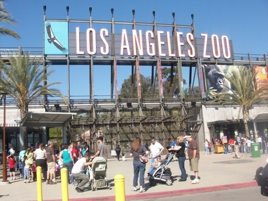 Stroller Rentals. Both single and double strollers are available for rental while you enjoy the Los Angeles Zoo. Stroller rentals are conveniently located at the International Marketplace.