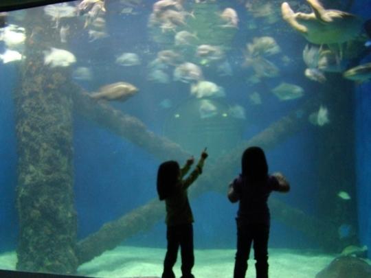 Virginia Aquarium And Marine Science Center Virginia