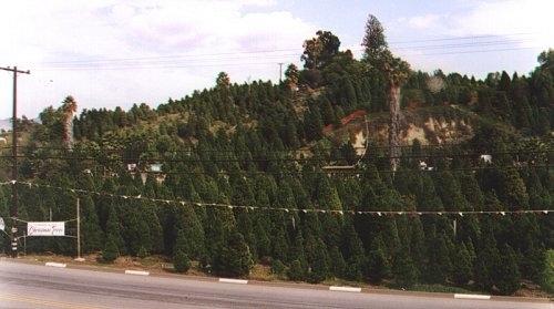 Richfield Pines Christmas Tree Farm