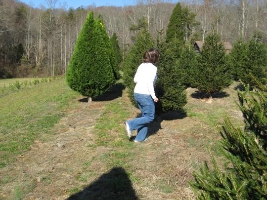 Bluebird Christmas Tree Farm in Heiskell, Tennessee - Kid ...