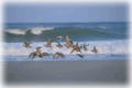Pea Island National Wildlife Refuge | travel activity for kids - 4.0 star rating