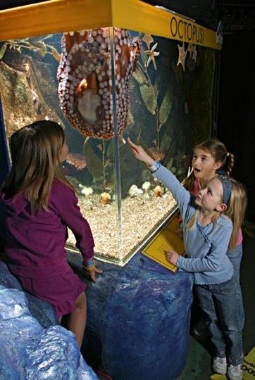 Sealife Minnesota Aquarium Bloomington Mn Kid