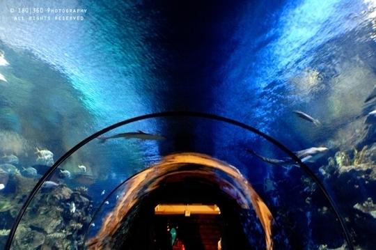 Shark Reef Aquarium At Mandalay Bay Resort Las Vegas Nv
