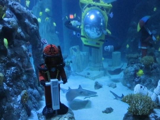 Sea Life Aquarium Carlsbad Ca Kid Friendly Activity