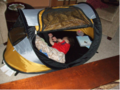 Lightweight Travel Cribs - Review of the Kidco Peapod - family travel tip