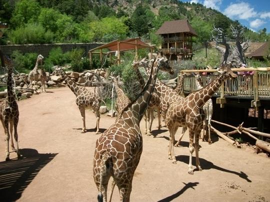 Cheyenne Mountain Zoo Colorado Springs Co Kid