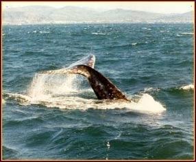 Tradewinds charters depoe bay or kid friendly for Depoe bay fishing charters