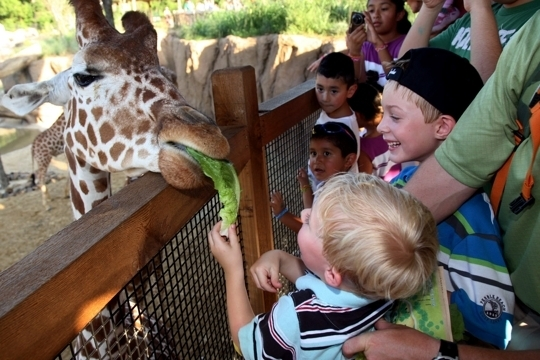 Dallas Zoo Dallas Tx Kid Friendly Activity Reviews