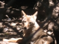 Sulphur Creek Nature Center | travel activity for kids - 5.0 star rating