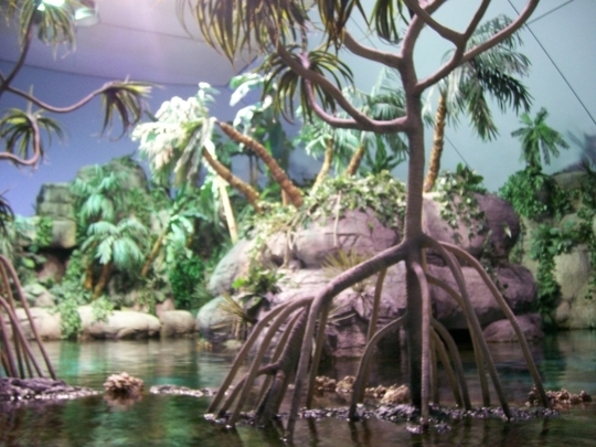 Moody Gardens Galveston Tx Kid Friendly Activity