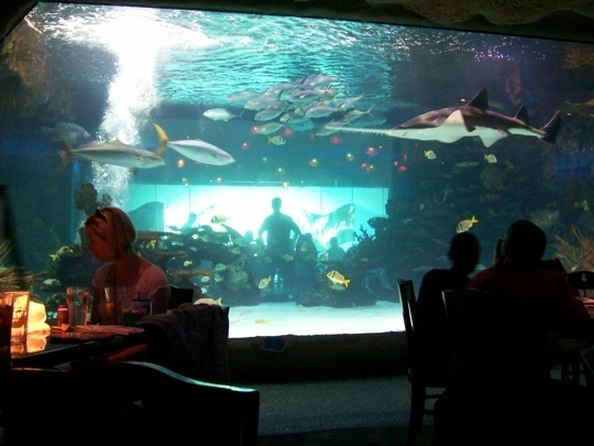 Downtown Aquarium Houston Tx Kid Friendly Activity