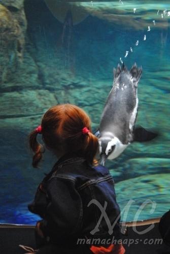 Ripleys Aquarium Of The Smokies Gatlinburg Tn Kid