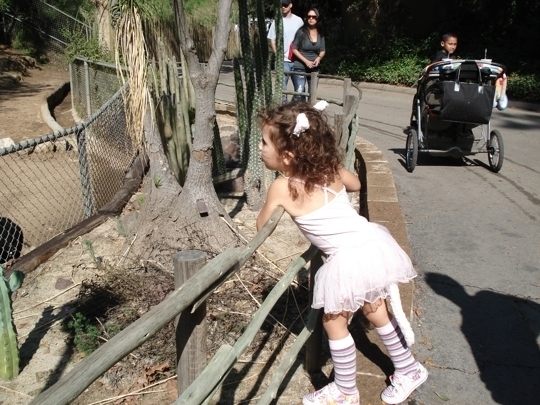 The Baton Rouge Zoo is a place where people connect with animals. Over the past forty years, the Zoo has grown to become the #1 year-round family attraction in Baton Rouge. With more than a quarter million guests each year, the Zoo attracts visitors of all ages and backgrounds.