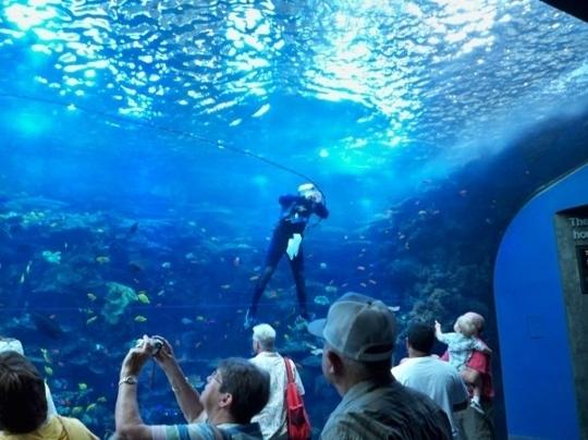 Atlanta Georgia Aquarium Cost