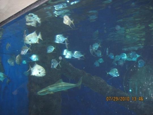 Virginia Aquarium And Marine Science Center Virginia Beach Va Trekaroo