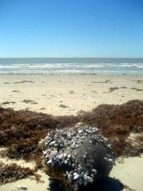 Mae's Beach - Cameron, Louisiana