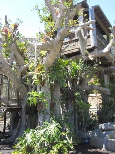 San Diego Botanic Gardens Encinitas Ca Kid Friendly Activity R Trekaroo