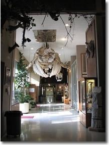 Www Sierracollege Edu Museum Of Natural History