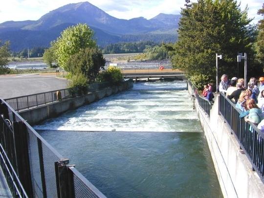 Bonneville dam fish ladder cascade locks or kid friendly activ trekaroo for Hood river swimming pool hours