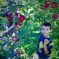 Crooked Run Orchard | travel activity for kids - 5.0 star rating