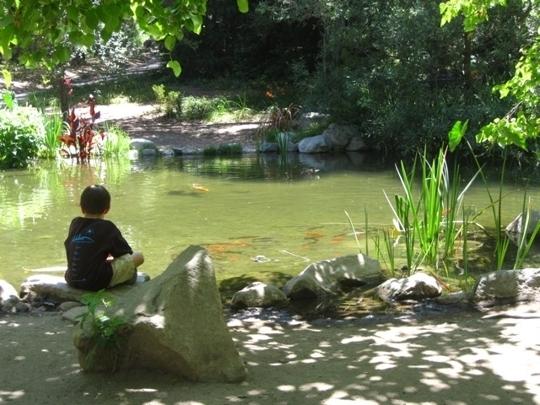 Hotels In Monterey Ca >> Descanso Gardens - La Canada Flintridge, CA - Kid friendly activity... - Trekaroo