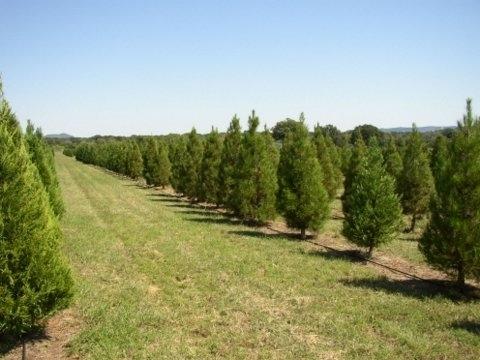 Christmas Tree Lots In San Antonio, TX! - Trekaroo