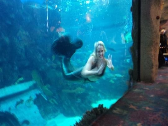 Denver Aquarium Cost